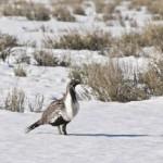 Wyoming Conservation Exchange
