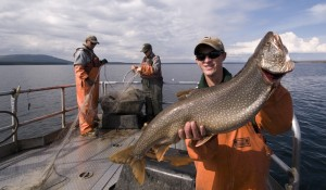 Commercial fishermen use gillnets to pull lake trout out of Yellowstone Lake. Photo by Jay Fleming.