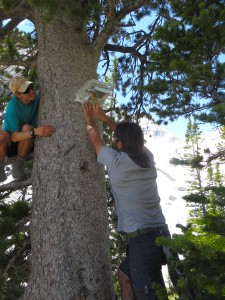 Oliver Sco eld and James Kardouni, seasonal sta , installing a high elevation temperature logger.