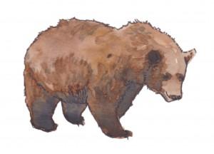 bear - Carnivores, Not Condos