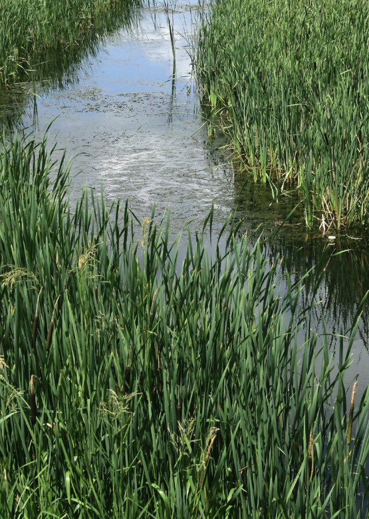 The True Value of Flood Irrigation
