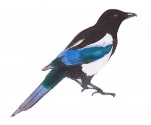 magpie - Carnivores, Not Condos