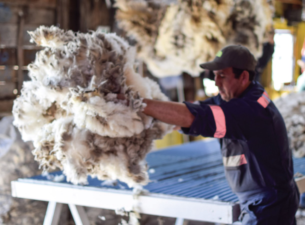 Sorting wool in Patagonia. Ammon Medina.