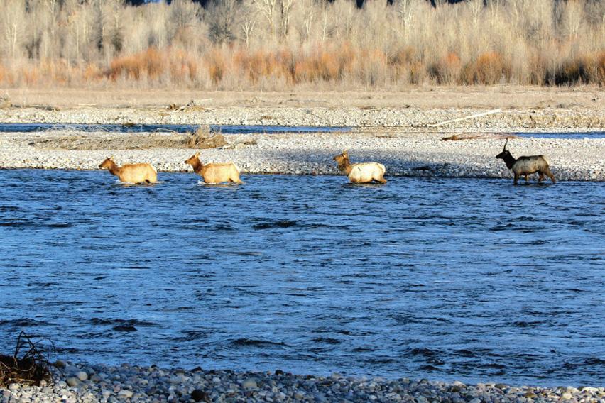 Courtesy Jackson Hole Land Trust/Bob Peters