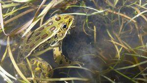 Amphibious Citizen Scientists