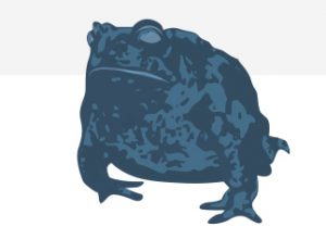 Blue illustration of Wyoming toad