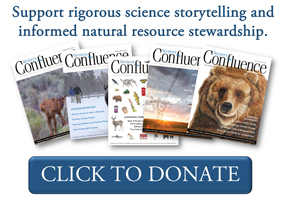 Support rigorous science storytelling: click to donate