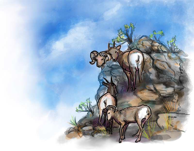 sheep on rocks