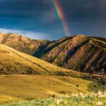 Herbicides in Wildlands