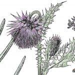 Nonnatives, Invasives, Weeds
