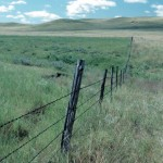 Rotational grazing does the trick