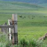 Economics of engineering with livestock: Incentives for establishing biological diversity