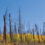"""Regen"": An ecologist's retrospective on the wildfires of 2012"