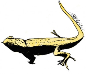 Dunes sagebrush lizard. Drawing by Bethann Merkle. Reproduction requires permission of the artist.