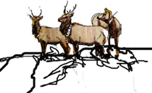 Elk. Drawing by Bethann Merkle. Reproduction requires permission of the artist.