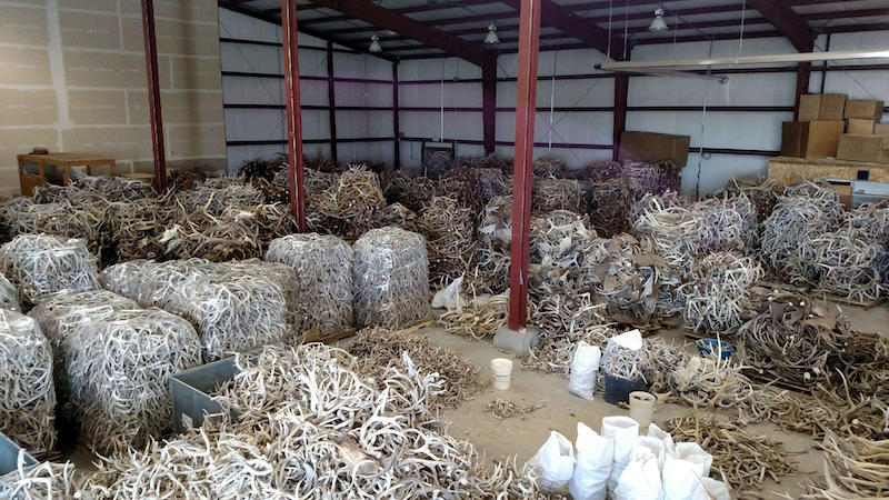 Antlers in an Idaho warehouse await shipping. Many will end up in Korea and China.