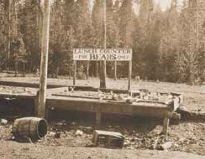 """Historic photo of bear feeding area in Yellowstone National Park in the 1920s with sign reading """"Lunch Counter for Bears Only"""""""