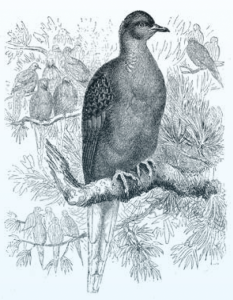 Endling poem illustration of bird