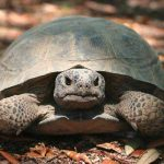 Lesson from a Tortoise