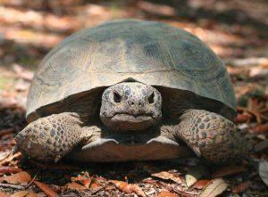Tortoise on leaves