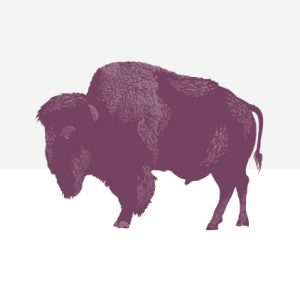 Purple drawing of a bison
