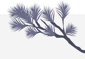 Illustration of purple whitebark pine branch