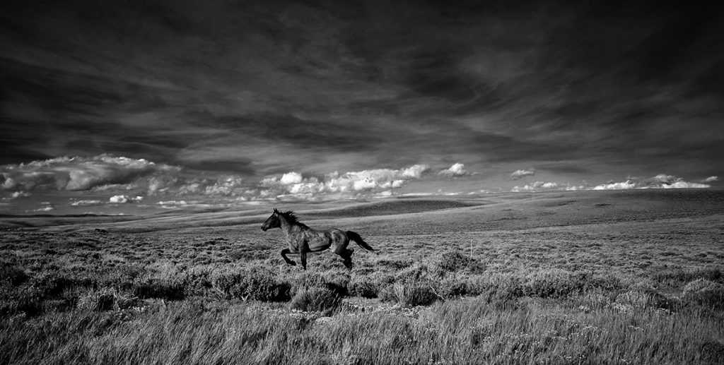 Wild horse running in grassy field. Photo by Eric Krszjzaniek.