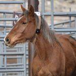 Tracking Wild Horses