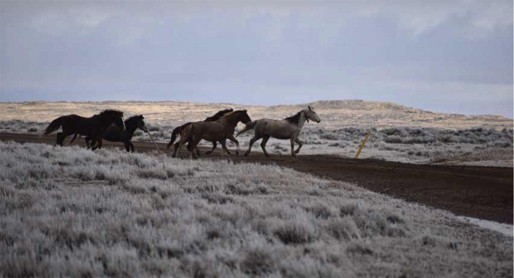 wild horses crossing dirt road