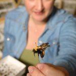 Unsung Pollinators