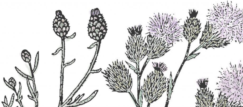 Weeds illustration