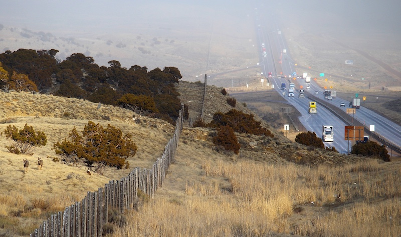 Mule deer move along an eight-foot-tall game fence.