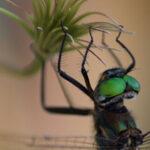 Crouching Scientist, Hidden Dragonfly