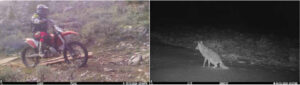 game camera caught motorcycle and fox
