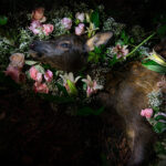 A Last Leap Towards Flowers