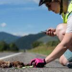 Ride for Roadkill