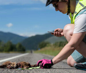 person touching roadkill on road