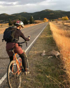 person stopping on bike by roadkill